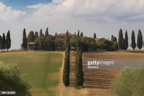 Beautiful typical panorama landscape of Val d'Orcia in Tuscany with a row of cypress trees in summer, Val d'Orcia, Tuscany, Italy
