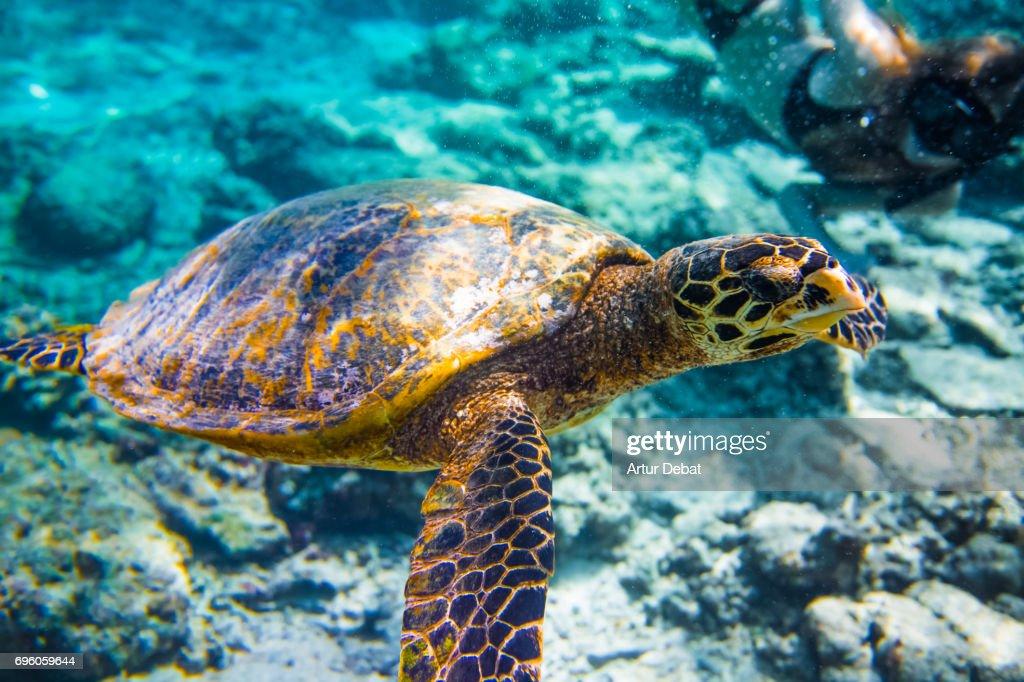 Image result for sea turtles pix