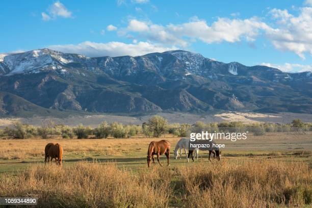 beautiful utah valley with mountain and grazing horses - ranch stock pictures, royalty-free photos & images