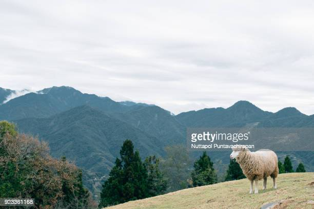 Beautiful Valley of Qingjing Sheep Farm, Cingjing, Taiwan