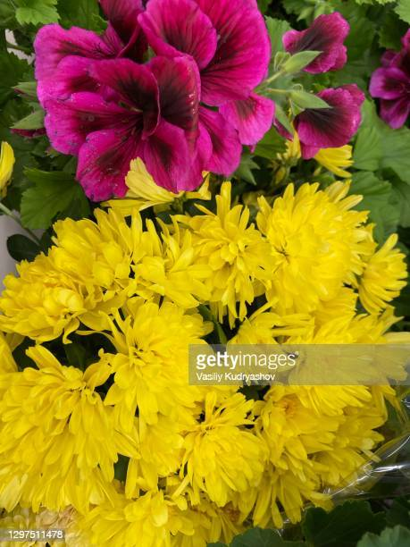 composition with yellow pink flowers