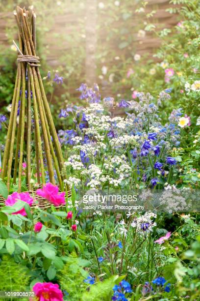beautiful vibrant english cottage garden flowerbed with wicker plant support in the hazy summer sunshine - columbine flower stock pictures, royalty-free photos & images