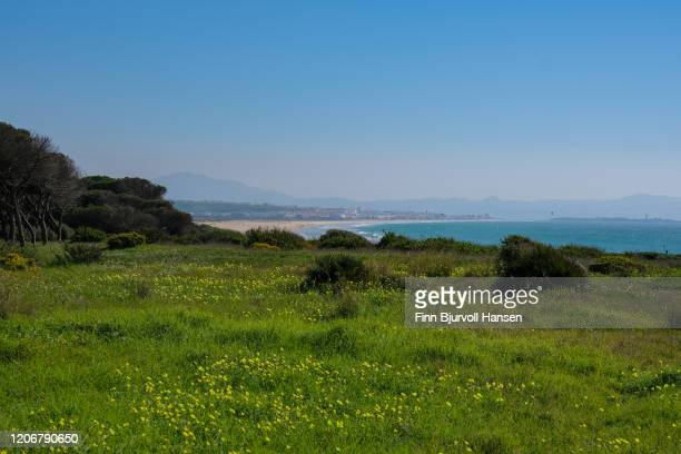 beautiful view from los lanches north. green field, flowers, tarifa in background - finn bjurvoll - fotografias e filmes do acervo
