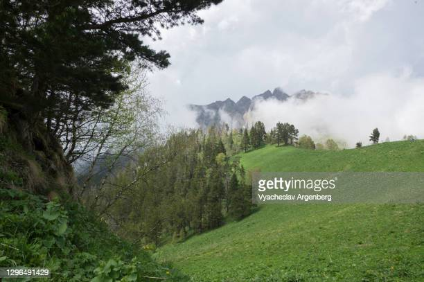 beautiful view in the wilderness, mountain scenery of shisha valley, caucasus mountains - argenberg stock pictures, royalty-free photos & images