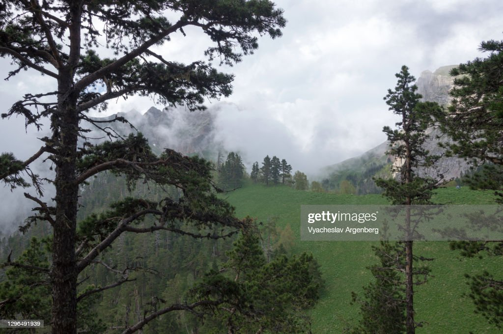 Beautiful view in the wilderness, mountain scenery of Shisha Valley, pine woodlands of Caucasus Mountains : Stock Photo
