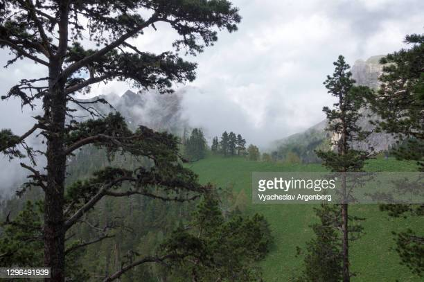 beautiful view in the wilderness, mountain scenery of shisha valley, pine woodlands of caucasus mountains - argenberg stock pictures, royalty-free photos & images