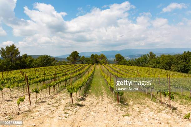 beautiful view of a vineyard in the south of france - laurent sauvel photos et images de collection