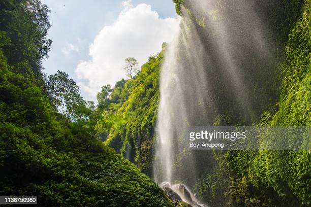beautiful view of madakaripura waterfalls in east java of indonesia. - java indonesia fotografías e imágenes de stock