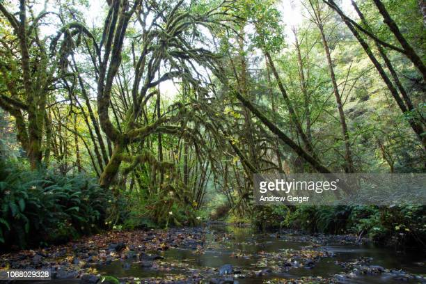 Beautiful view of mysterious, lush moss covered forest and stream.