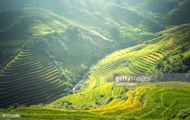Beautiful view of rice terrace