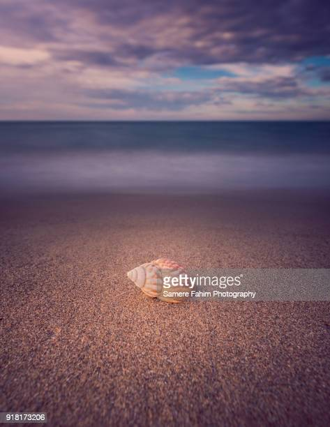a beautiful view of seashell on a sand beach - samere fahim stock photos and pictures