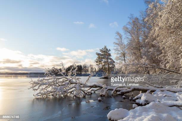 Beautiful view of snowy trees and frozen Lake Pyhäjärvi on a sunny day in the winter in Tampere, Finland. Copy space.