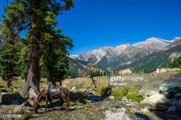beautiful view of sonamarg valley in kashmir, india - shaifulzamri stock pictures, royalty-free photos & images