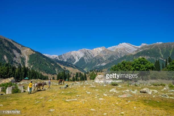 beautiful view of sonamarg valley in kashmir, india - shaifulzamri stock-fotos und bilder