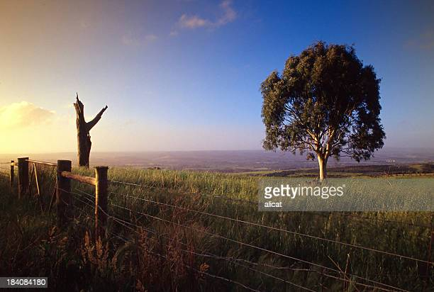 beautiful view of the australian landscape - south australia stock pictures, royalty-free photos & images