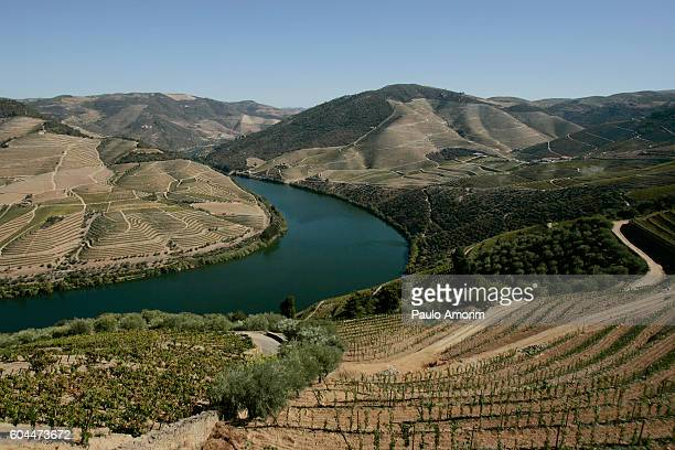 Beautiful View of the Douro Valley in Portugal