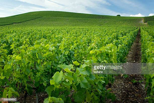 beautiful view of the gardens in champagne france - campania stock pictures, royalty-free photos & images
