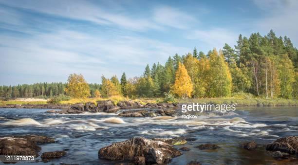 森のある川の美しい景色。 - ヌーシャテル ストックフォトと画像