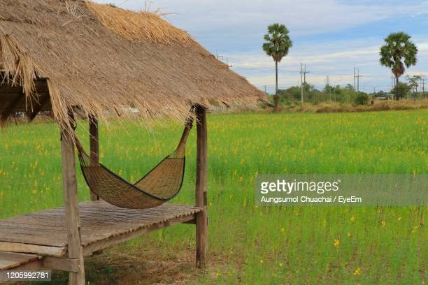 beautiful view of wooden hut in the tropical farm with sunn hemp flowers fields in summer time. - aungsumol stock pictures, royalty-free photos & images