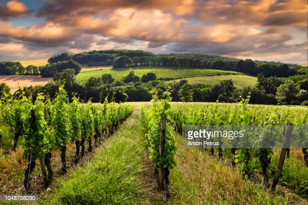 Beautiful view with vineyards at sunset in Bordeaux, France