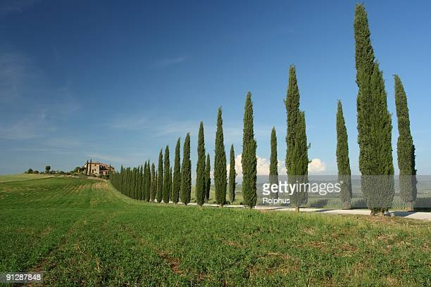 beautiful villa with cypress avenue spring - sonnig stock pictures, royalty-free photos & images