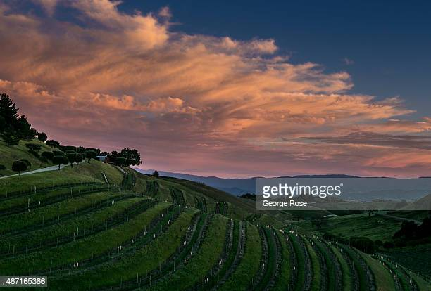 A beautiful vineyard sunset is viewed in the southern sky near Ballard Canyon on March 17 near Santa Ynez California Because of its close proximity...