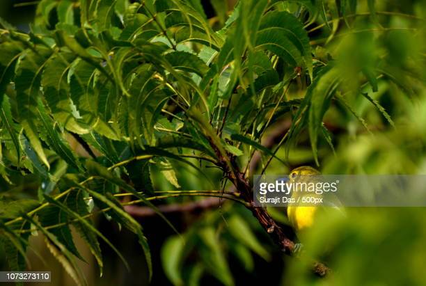 Beautiful warbler in nature