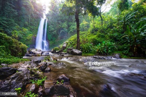 beautiful waterfall hidden in the tropical jungle of bali, indonesia. - shaifulzamri bildbanksfoton och bilder