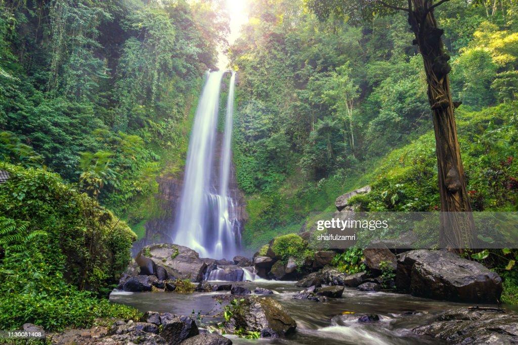 Beautiful waterfall hidden in the tropical jungle of Bali, Indonesia. : Stock Photo