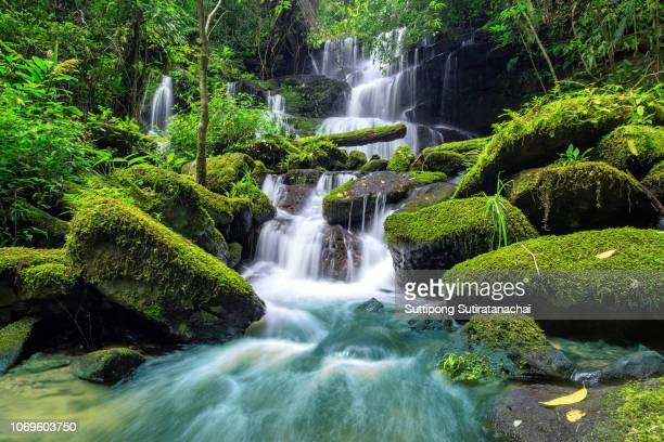 beautiful waterfall in green forest in jungle at phu tub berk mountain , phetchabun , thailand - bicolore colore foto e immagini stock