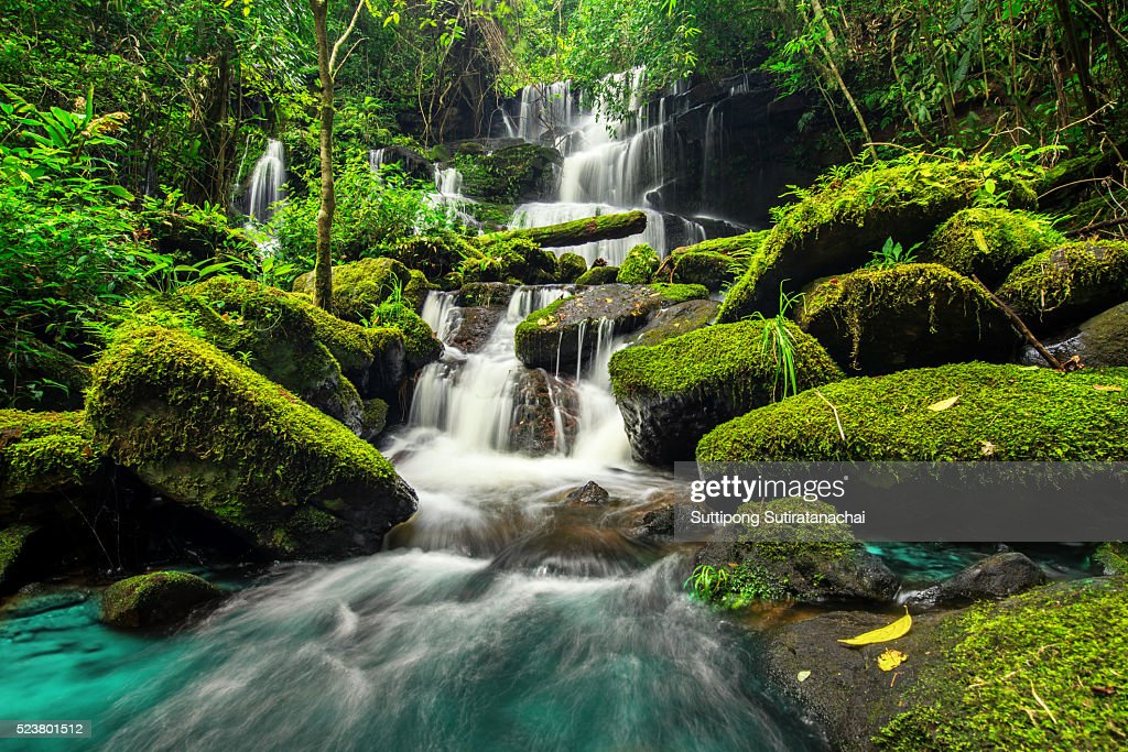 beautiful waterfall in green forest in jungle at phu tub berk mountain , phetchabun , Thailand : Stock Photo