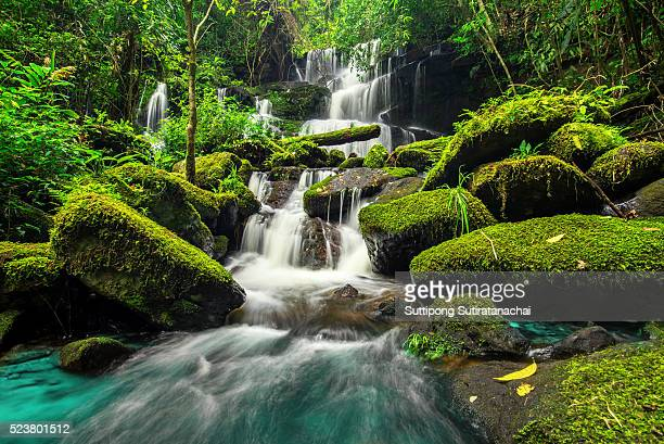 beautiful waterfall in green forest in jungle at phu tub berk mountain , phetchabun , thailand - wasserfall stock-fotos und bilder