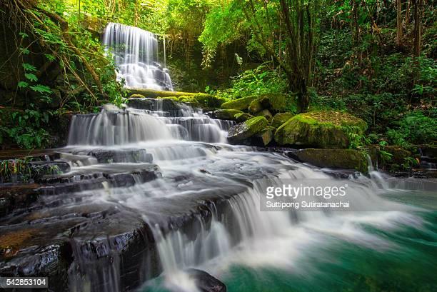 beautiful waterfall in green forest in jungle