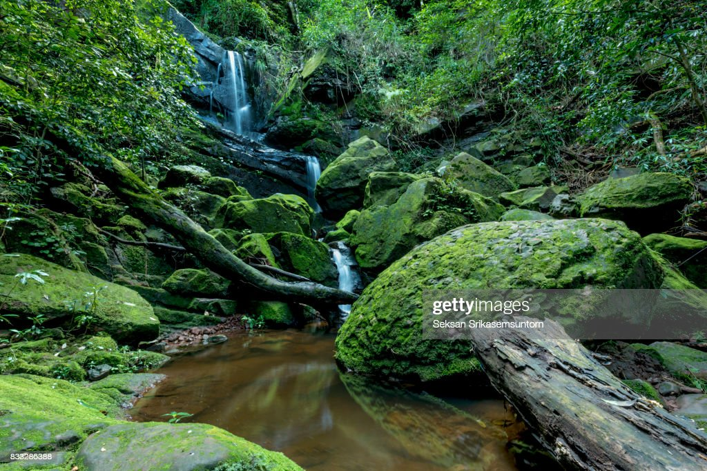 beautiful waterfall in green forest in jungle : Stock Photo
