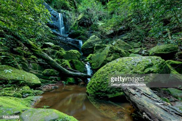 beautiful waterfall in green forest in jungle - spring flowing water stock pictures, royalty-free photos & images