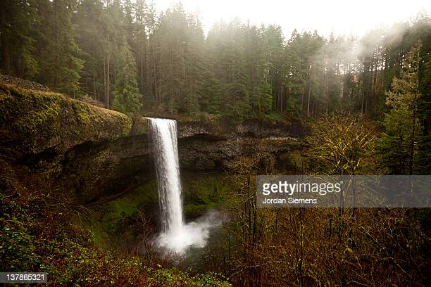 beautiful waterfall in the forest. - eugene oregon stock pictures, royalty-free photos & images