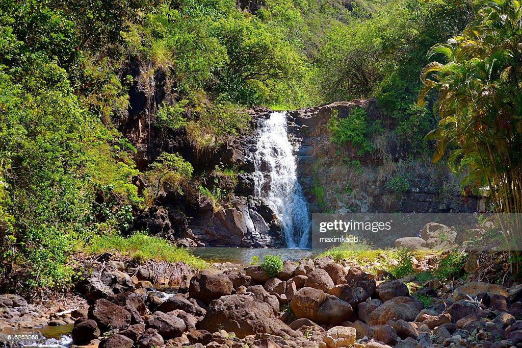 Beautiful waterfall in Waimea Valley on Oahu : Foto de stock