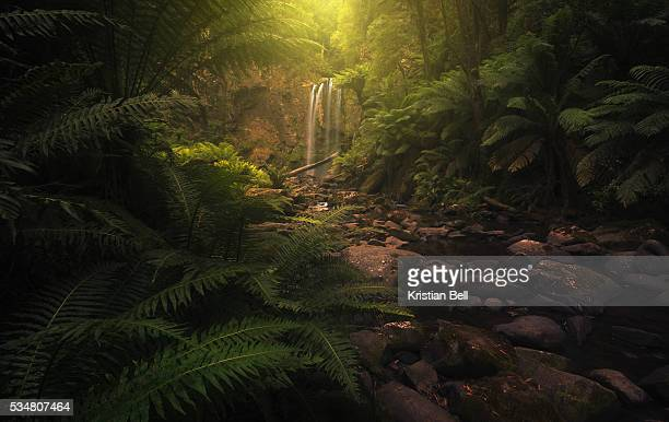 beautiful waterfall, stream and lush undergrowth in victoria, australia - mood stream stock pictures, royalty-free photos & images