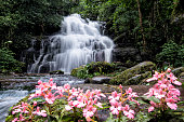 Beautiful waterfall with pink snapdragon flower in foreground , Mun dang waterfall at Phu Hin Rong Kla National Park,  Petchaboon province,Thailand