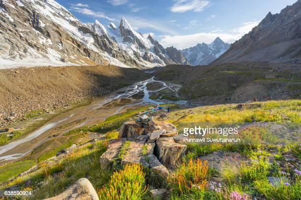 beautiful wild flower at khuspang camp with laila peak and masherbrum mountain background, k2 trek, pakistan - gilgit baltistan stock photos and pictures