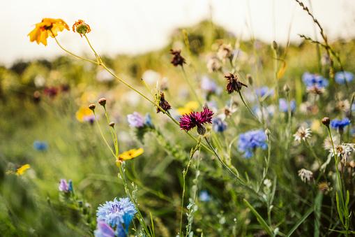 Beautiful wild flowers in a meadow 1012460710