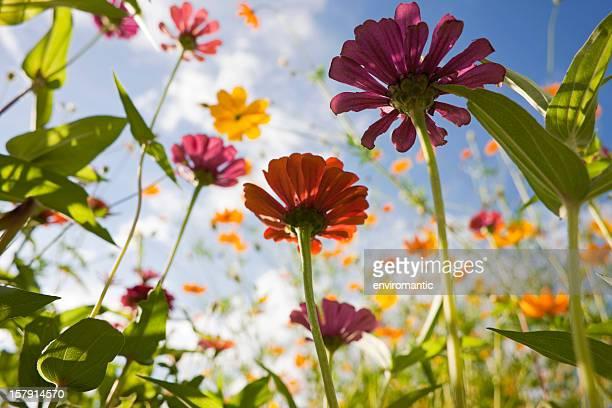 Schöne wilde Blumen auf einer Wiese.