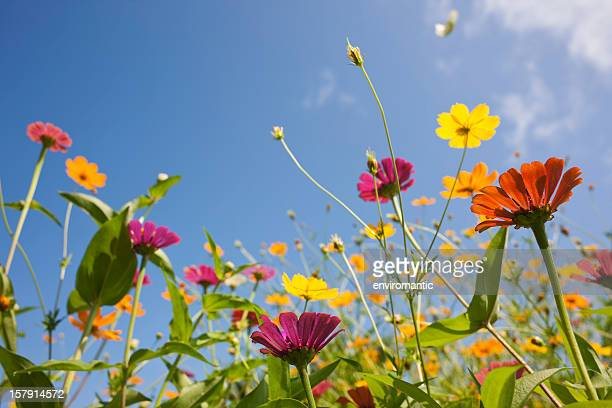 beautiful wild flowers in a meadow. - meadow stock photos and pictures