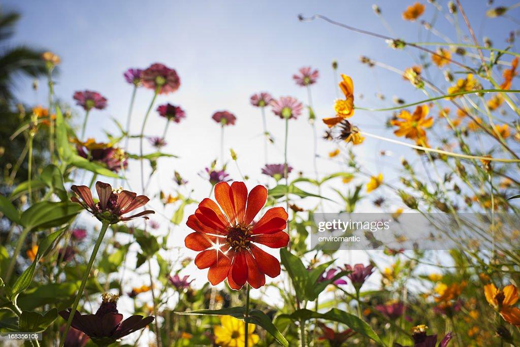 Lindas flores silvestres em um prado. : Foto de stock