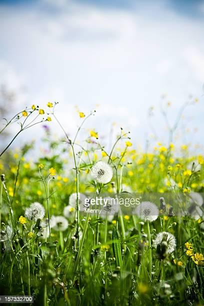 Belles fleurs sauvages