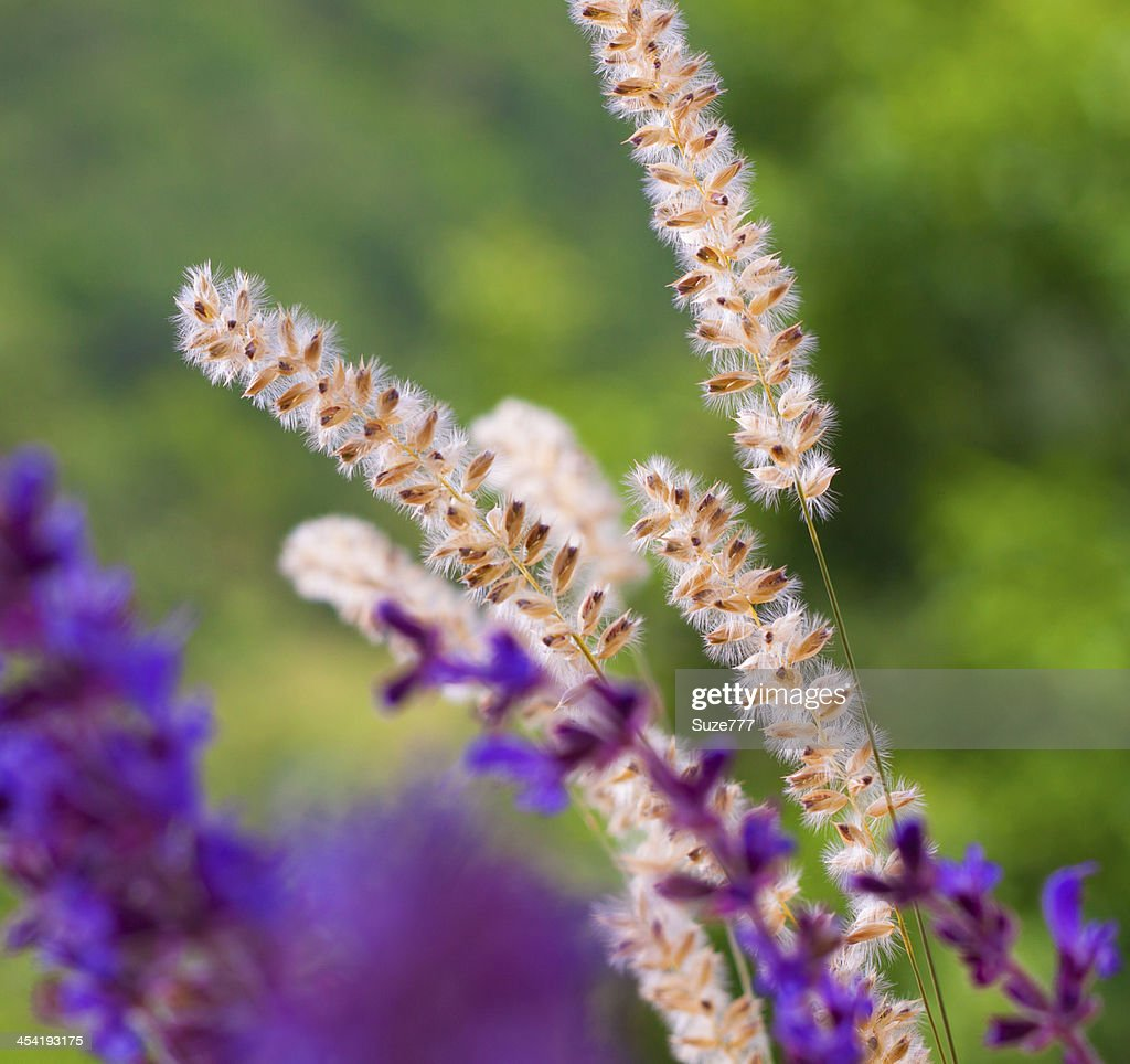 Beautiful wild flowers : Stock Photo