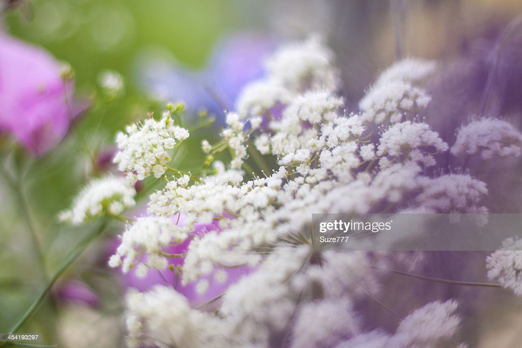 Beautiful wild flowers : Stock Photo