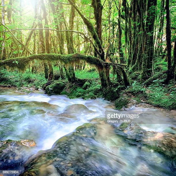 Beautiful wild fresh water stream in forest under bright sunlight