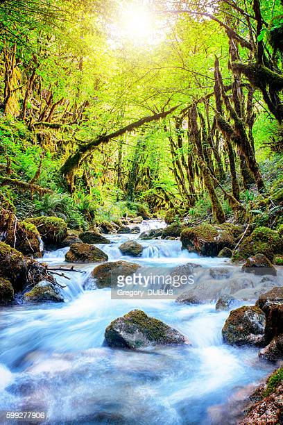 Beautiful wild fresh water stream in forest under bright sunlight