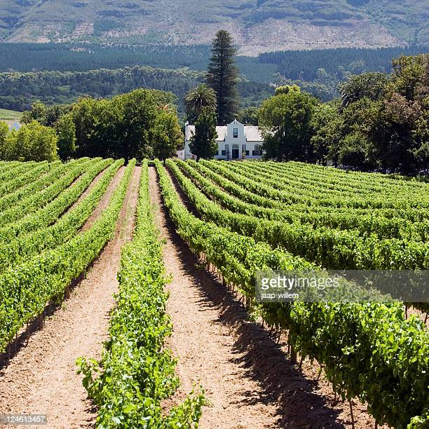 a beautiful winery in south africa - constantia stock pictures, royalty-free photos & images